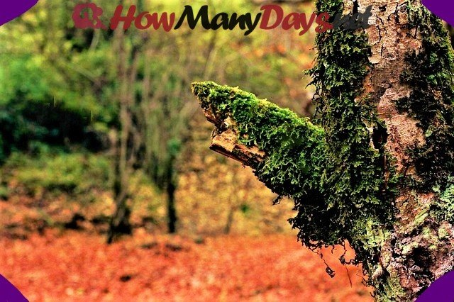 How many days in autumn