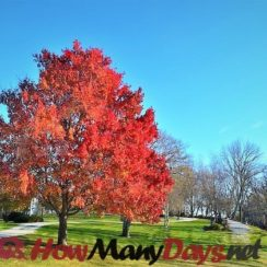 how many days until autumn