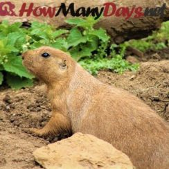 how many days until groundhog day